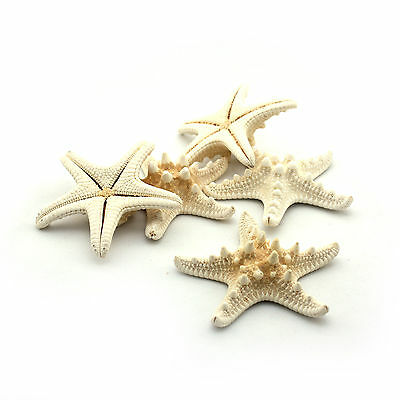 "Starfish Horn (pk 10) 1""-2"" / 2.5cm - 5cm / Beach Wedding Decor / Scrapbooking"