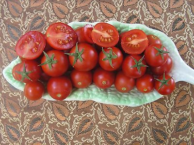 Tomato – Cocktail Red Cherry (solanum lycopersicum) 20 Reliable Viable Seeds