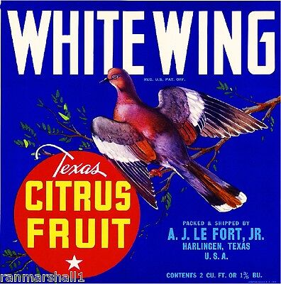 Harlingen Texas White Wing Dove Bird Orange Citrus Fruit Crate Label Art Print
