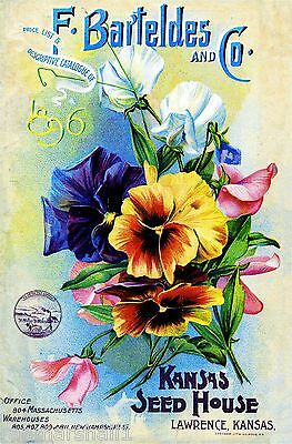 1896 Barteldes Pansy Vintage Flowers Seed Packet Catalogue Advertisement Poster