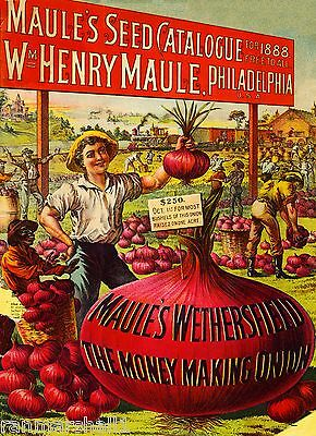 1888 Maules Onion Vintage Vegetable Seed Packet Catalogue Advertisement Poster