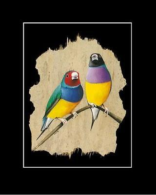 GOULDIAN FINCH - Print - SIGNED BY ARTIST -- Uniquely Australian by John Gray