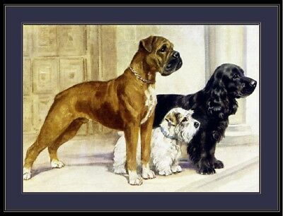 English Picture Print Boxer Cocker Spaniel Dog Dogs Puppy Vintage Poster Art