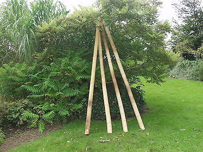 Bamboo Poles for screen ANJI NATURE 200 cm Ø 10 12 cm