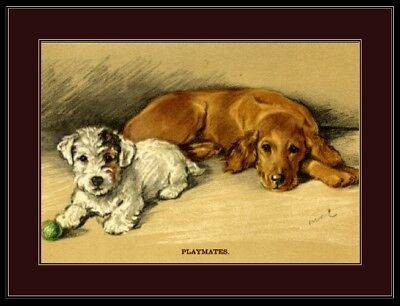 English Picture Poster Print Golden Retriever Sealyham Terrier Dog Dogs Art