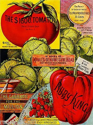 Maule's Tomato $ Vintage Vegetable Seed Packet Catalogue Advertisement Poster
