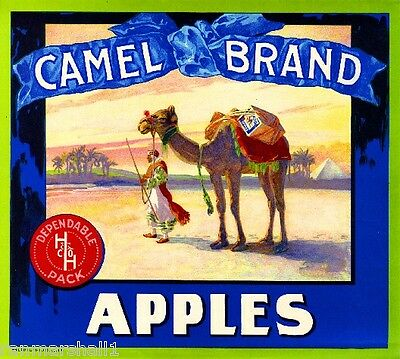 Watsonville Santa Cruz County California Camel Apple Fruit Crate Label Art Print
