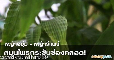 """Repair Grass"" or ""Heeyoom Grass"" Amazing Thai herb bring back your virginity!"
