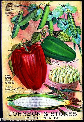 Johnson Pea Pepper Vintage Vegetable Seed Packet Catalogue Advertisement Poster