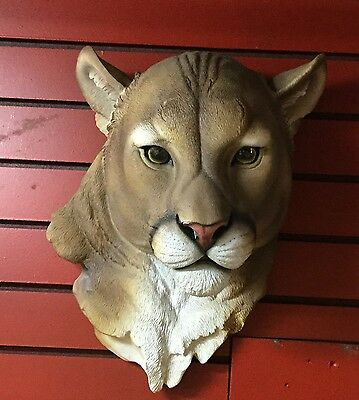 Large Mountain Lion Head Mount  Taxidermy Like