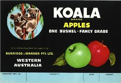 Western Australia Koala Bear Apple Fruit Crate Label Art Print