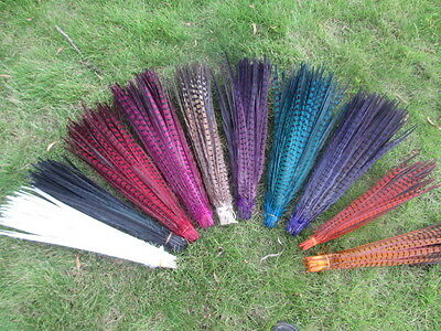 Wholesale natural-pheasant-tail-feather-length-20-22 inches-choice-of-colors