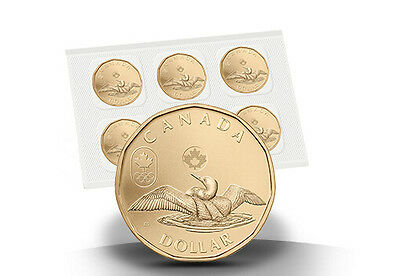 2014 $1 Lucky Loonie CIRCULATION PACK of 5 Canada Canadian One Dollar Five coin
