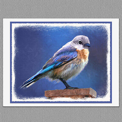 6 Female Bluebird Wild Bird Blank Art Note Greeting Cards