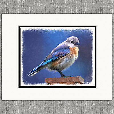 Female Bluebird Wild Bird Original Art Print 8x10 Matted to 11x14