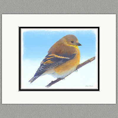 Female Goldfinch Wild Bird Original Art Print 8x10 Matted to 11x14