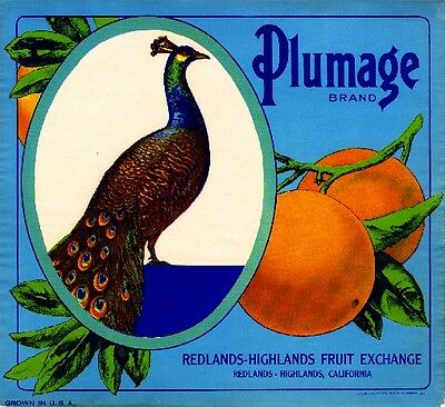 Redlands California Plumage Peacock Orange Citrus Fruit Crate Label Art Print