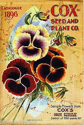 1896 Cox's Pansies Vintage Flowers Seed Packet Catalogue Advertisement Poster