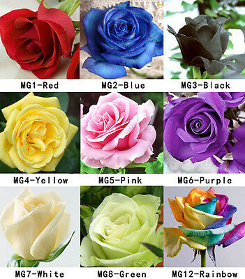 100 Colorful Rare Rose Seeds Fresh Rose Seed For Lover