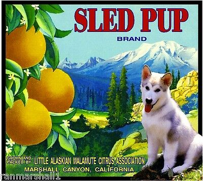 Marshall Canyon Alaskan Malamute Dog Orange Citrus Fruit Crate Label Art Print