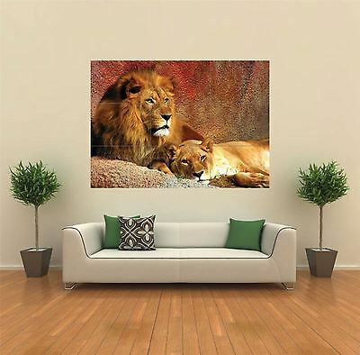 Lion Lioness Animal New Giant Large Art Print Poster Picture Wall G156