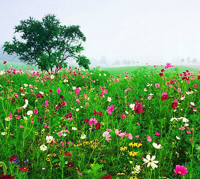 200 Mix Colorful Perennial Wildflowers Seeds Wild Flowers Garden Flower