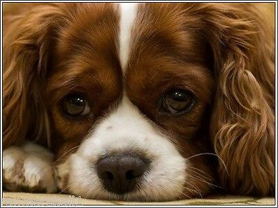 Pack of 4 Dog Puppy Cavalier King Charles Spaniel Greeting Notecards/ Envelopes
