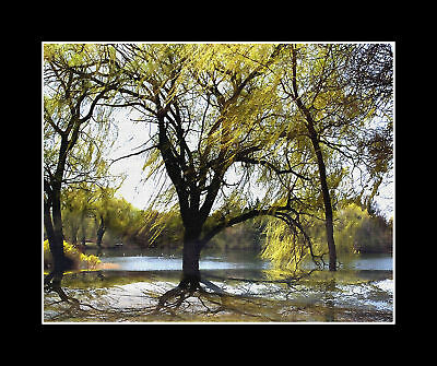 """Matted 8x10 Metallic Photograph """"WILLOW TREES IN THE LAKE"""" Wall Art Decor (SME)"""