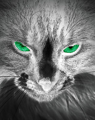 """Silver METALLIC (etc)  Photograph """"RED or GREEN eyed Cat"""" Decor Art  Abstract"""