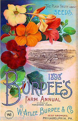 1898 Burpee's Farm Annual Vintage Flowers Seed Packet Advertisement Art  Poster