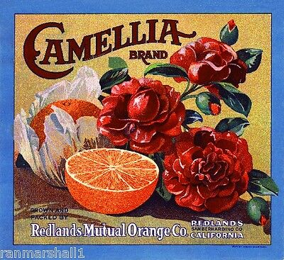 Redlands Camellia Version #6 Orange Citrus Fruit Crate Label Art Print