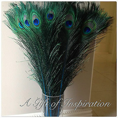 5 BLUE 70-80cm Peacock Eye Dyed Natural Feathers Millinery Vase Home Decor