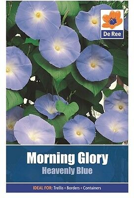 2 Packs of Morning Glory Heavenly Blue Flower Seeds, Approx 30 Seeds Per Pack