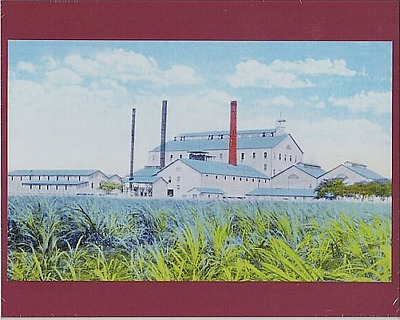"Ewa Plantation Mill 1915? Hand Colored B&w To Color Foto On 8X10"" Mat Board"