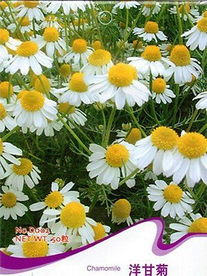 100 Chamomile Seeds Camomile Flores Chamomillae Chinese Herb Organic