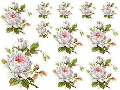 Vintage Image Shabby Victorian White Rose Waterslide Decals FL332
