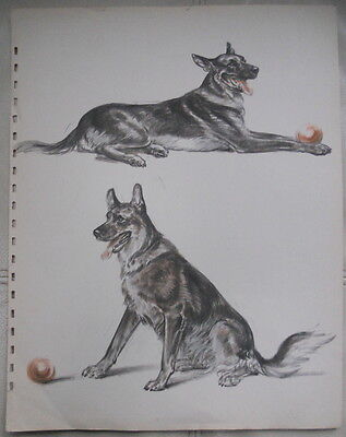 Diane Thorne Print of a German Shepherd with Red Ball, circa 1940s, Two Poses
