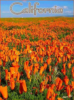 California Poppy Poppies United States of America Travel Advertisement Poster