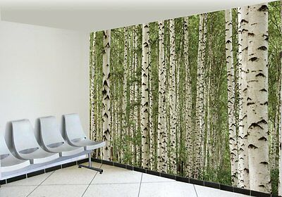 Birch Trees-Wall Mural-12'wide by 8'high