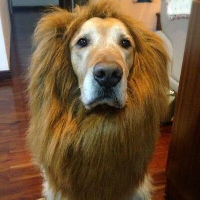 UK SELLER LARGE DOG LION MANE WIG HAIR CLOTHES COSTUME FUNNY SENT 1st CLASS