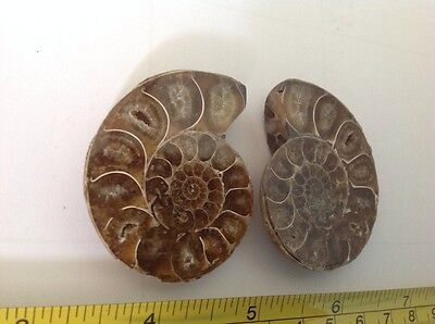 Split pair Ammonite polished sea shell fossils, geode like crystals shells 2.1""