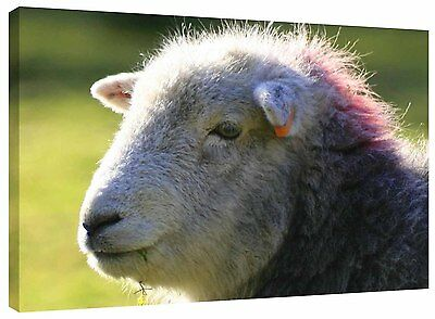 Punk Sheep Canvas Wall Art Picture Print