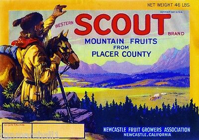 Newcastle Placer County Western Scout Pear Fruit Crate Label Art Print