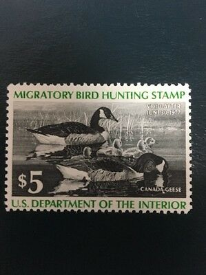 US RW43 Federal Duck Stamp - mint never hinged - very nice 1976 stamp
