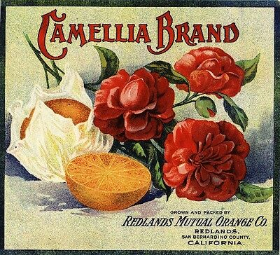 Redlands Camellia Version #4 Orange Citrus Fruit Crate Label Art Print