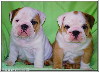 set of 4 Bulldog Puppy Dog puppies Dogs Stationery Greeting Notecards/ Envelopes