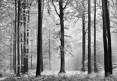 """Photo Wallpaper BLACK FOREST Wall Mural 366x254cm Large size Wall Art """"TREES"""""""