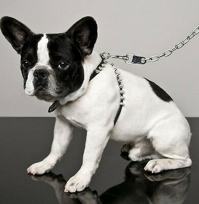 Dsquared² collar for medium-sized dogs super trendy, boxed