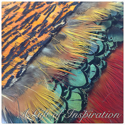 Mix of 20 Golden Pheasant feathers 5 of each colour craft/millinery/jewelery