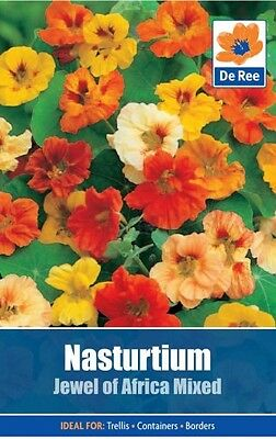 2 Packs of Nasturtium Jewel of Africa Mix Flower Seeds, Approx 6 seeds per pack